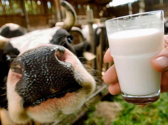 Актуальные проблемы производства и переработки молока обсуждены на молочном форуме - Новости таможни