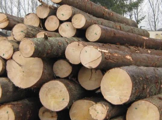 В Томске выявлена контрабанда лесоматериалов в крупном размере - Криминал