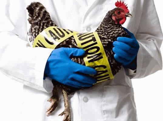 Законопроект о централизации ветеринарного надзора прошёл первое чтение