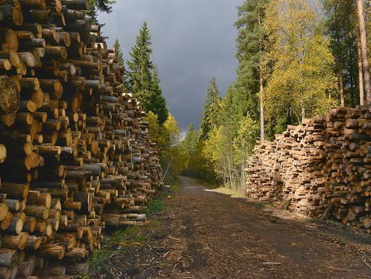 Почти 350 тысяч кубометров леса и лесоматериалов оформила Благовещенская таможня на экспорт за 9 месяцев 2018 года - Новости таможни