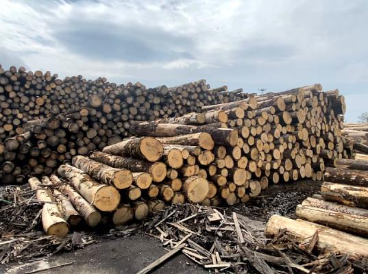 Читинская таможня выявила незаконный вывоз лесаматериалов в Китай стоимостью более 6,5 миллионов рублей