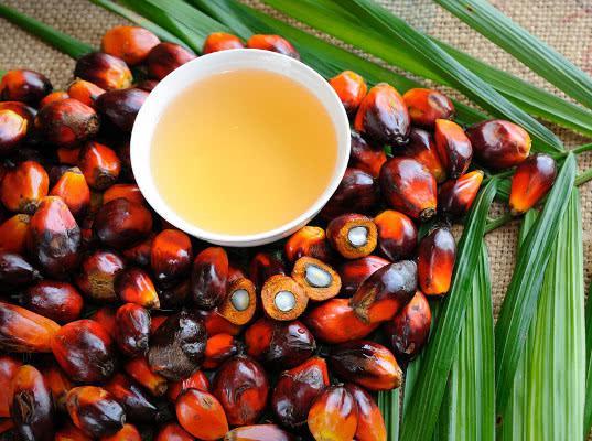 Импортируемое пальмовое масло заменит небезопасный маргарин - Обзор прессы