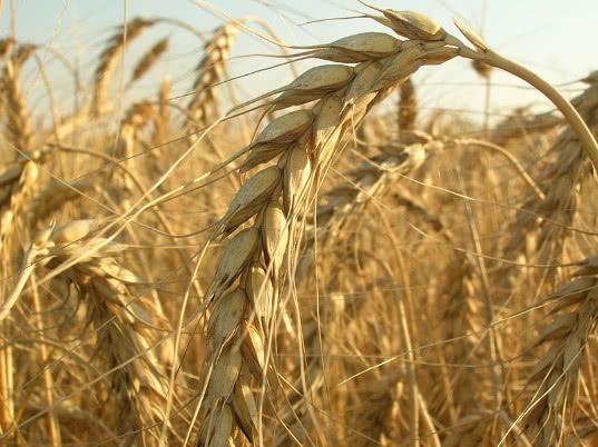 Суд Египта отменил решение властей о запрете на ввоз российской пшеницы