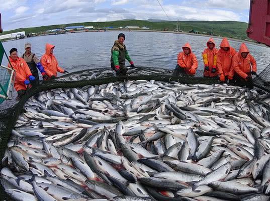 За май 2019 года из Приморья и Сахалина в Китай экспортировано 879 партий рыбной продукции