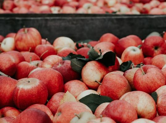 Турция резко сократила поставки яблок в Россию после инспектирования Россельхознадзором - Новости таможни