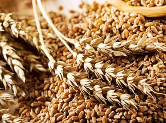 Индонезия довольна фитосанитарным состоянием российского зерна