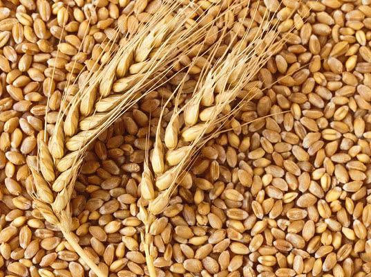В Минсельхозе заявили, что в РФ будет создан союз экспортеров зерна - Новости таможни