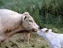 Россия ограничивает ввоз мясопродукции с ряда предприятий США, Франции, Германии, Уругвая и Бразилии - Новости таможни - TKS.RU