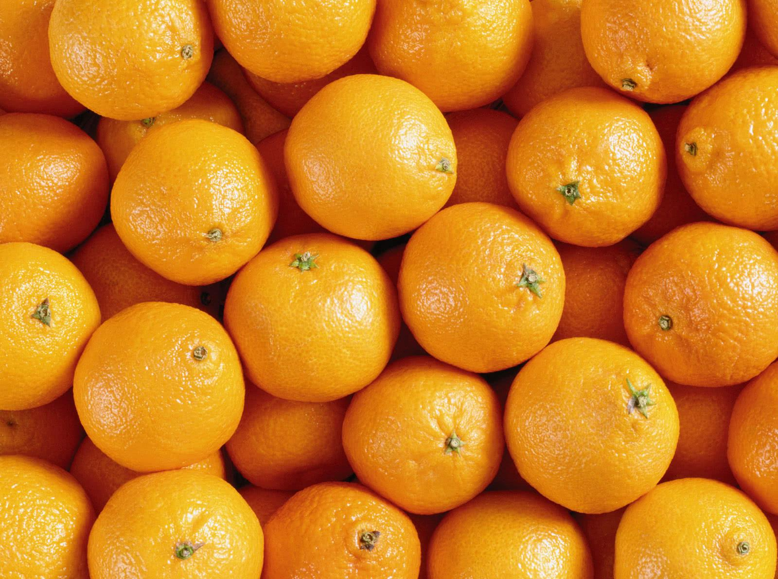 В марокканских апельсинах в Петербург «приплыла» плодовая муха - Криминал