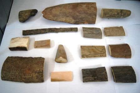 173 фрагмента бивней мамонта задержали благовещенские таможенники - Криминал