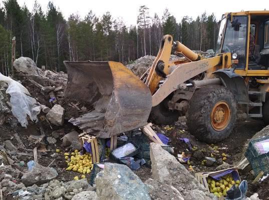Роспотребнадзор предложил запретить уничтожать продукты - Новости таможни