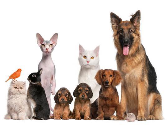 Об особенностях заграничных путешествий домашних животных