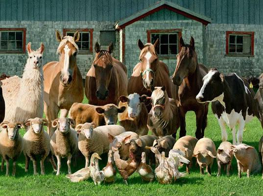 Законопроект по маркировке и учету животных готовит Минсельхоз