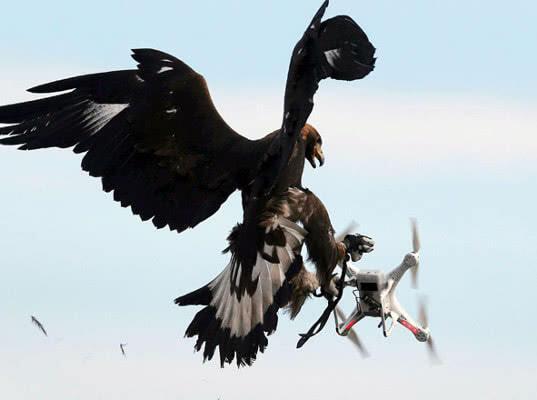 Правительство предложило распространить штрафы для летных экипажей на владельцев дронов - Логистика