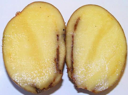 В Россию пытались ввезти более 137 тонн картофеля с «гнилью»