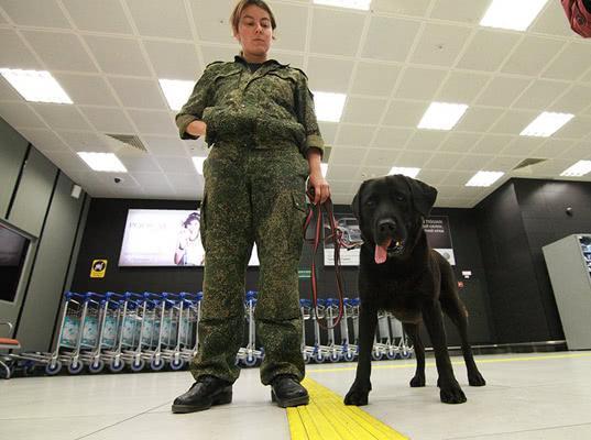 В аэропорту «Казань» выявили партию поддельной «Виагры» из Китая - Криминал