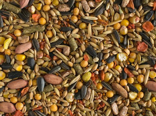 Выявлены ГМ-компоненты в кормах для грызунов из Италии и Бельгии - Криминал