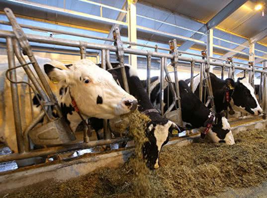 Россия готова увеличивать поставки сельскохозяйственной продукции в Австрию - Новости таможни
