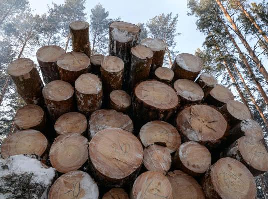 Рослесхоз предложил запретить скупку китайцами леса у граждан в Сибири