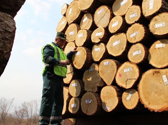 Более 2 млн кубометров древесины вывезено из Новгородской и Вологодской областей на экспорт в 2019 г.