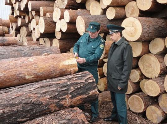 Красноярская таможня возбудила ещё 3 уголовных дела по валютным махинациям с экспортом леса