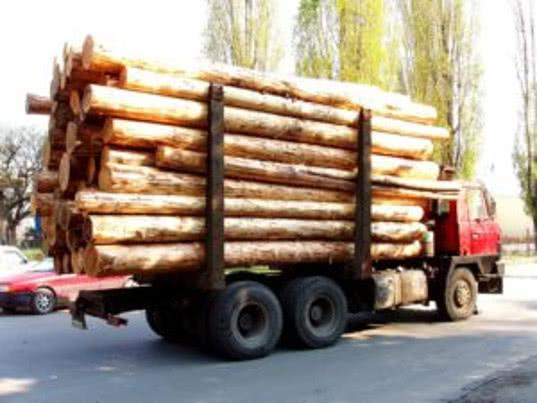 О 26 нарушениях при ввозе лесоматериалов в Челябинскую область