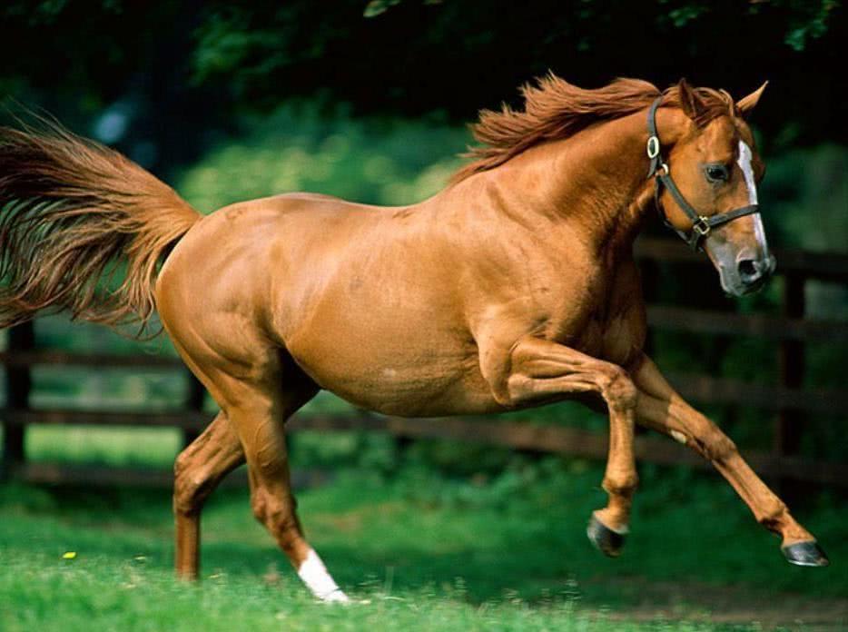 Таможенники пресекли незаконный ввоз племенных лошадей - Криминал