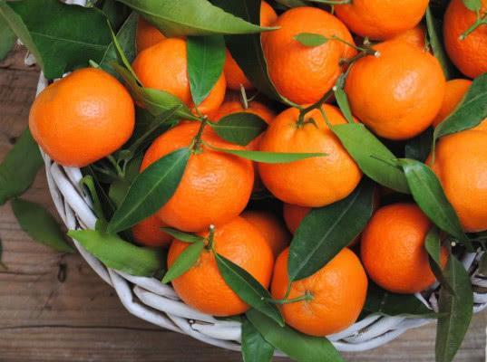 Абхазия обещает ввезти в Россию рекордное количество мандаринов - Новости таможни