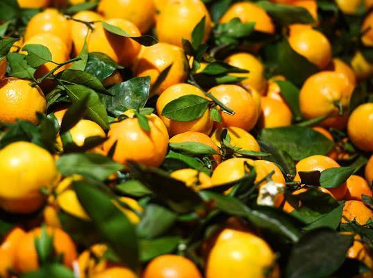 Эксперт предупредил о росте цен на мандарины к Новому году