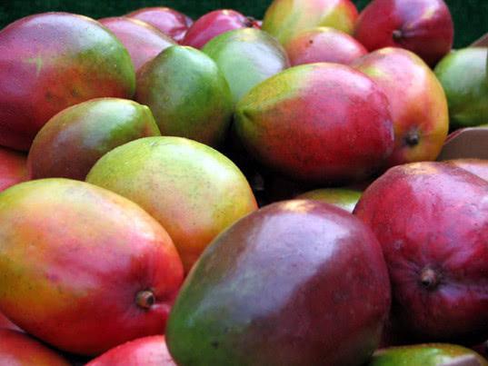 В порту «Новороссийск» не допущено к ввозу 22 тонны манго из Израиля