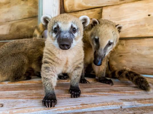 Ростовские таможенники задержали микроавтобус с 33 обезьянами и 8 носухами