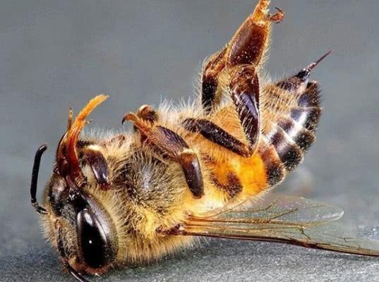Россельхознадзор обвинил Минэкономразвития в массовой гибели пчел - Экономика и общество