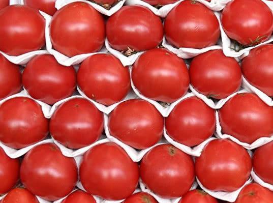 Россия до осени не будет увеличивать квоту на поставки томатов из Турции - Новости таможни