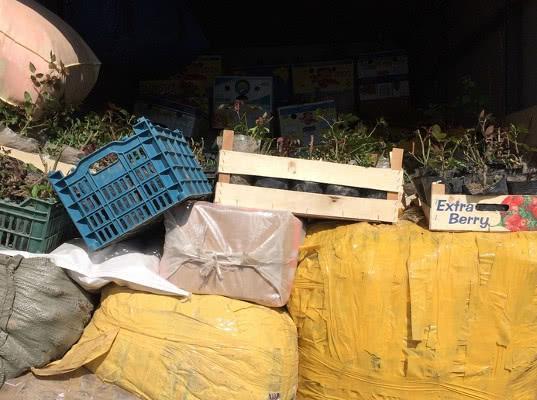 Более 123 тонн томатов, лука и посадочных материалов задержаны на въезде в Оренбургскую область