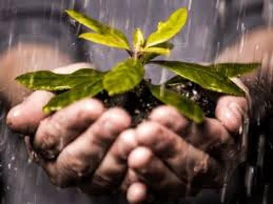 ЕЭК развивает сотрудничество с Европейской и Средиземноморской организацией по карантину и защите растений - Новости таможни