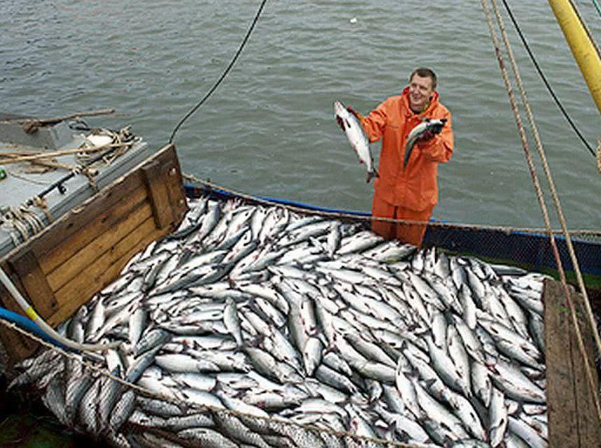 Абхазия разрешила российским рыбакам вывозить хамсу без оформления таможенных документов - Новости таможни
