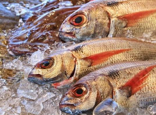По железным дорогам страны проехало более 6000 вагонов с рыбой - Логистика
