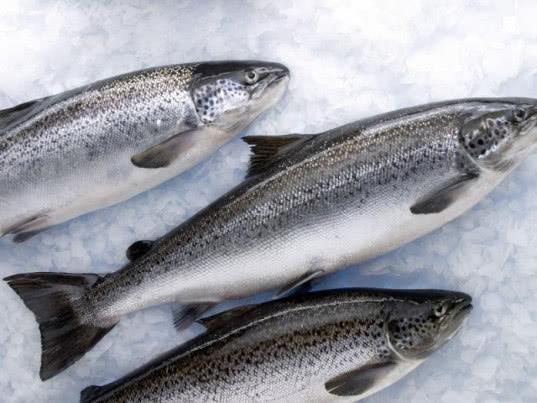 В Омской области на российско-казахстанской границе пресекли попытку ввоза 600 кг норвежского лосося