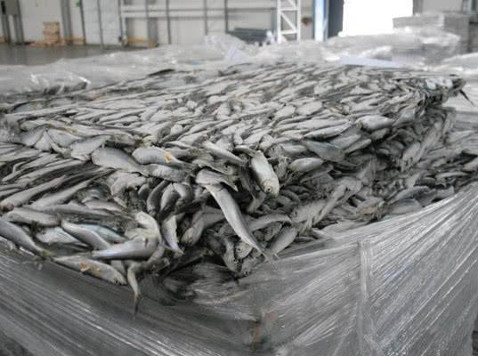 Более 13 тонн финской рыбы задержаны в Псковской области