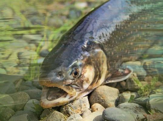В Республике Карелия задержана крупная партия корма для рыб