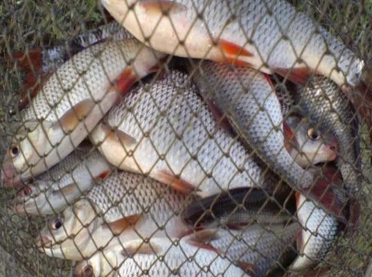 Подделку печати и подписи в петербургском рыбном деле расследуют по обновленной статье контрабанда