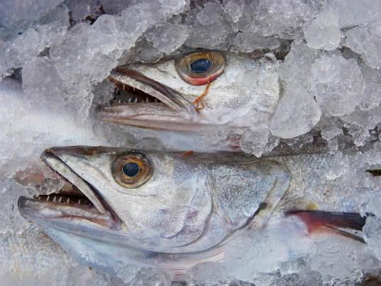 Предотвращен ввоз на территорию Забайкальского края рыбы без разрешительных документов