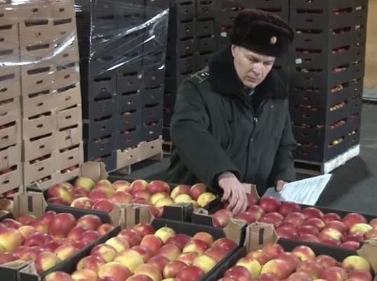 Один из пяти грузовиков с яблоками предпринял попытку скрыться от смоленских таможенников