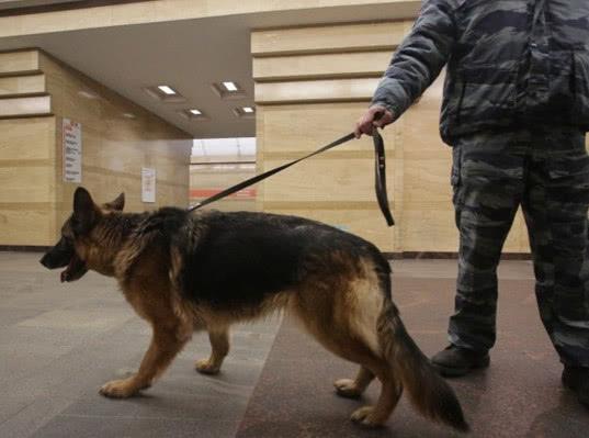 Все 69 станций петербургского метро проверили из-за сообщения о бомбе - Экономика и общество