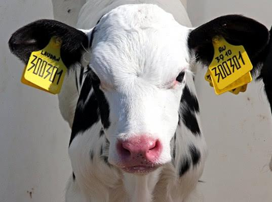 Минсельхоз разработал законопроект о маркировании животных