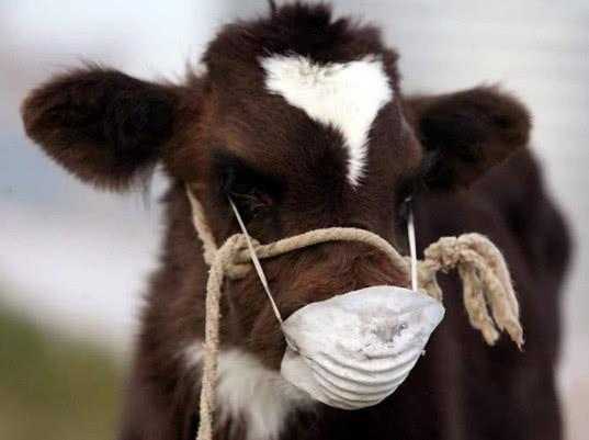 ЕЭК продолжит гармонизацию со Всемирной организацией здравоохранения животных