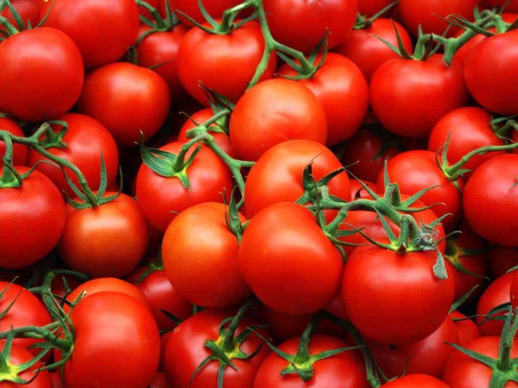 Экспорт томатов из Узбекистана в Россию увеличился в три раза - Новости таможни