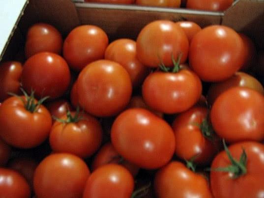 Россельхознадзор проведет очередную инспекцию производителей томатов в Турции - Новости таможни