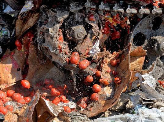 Томаты и перец раздавлены на полигоне Россельхознадзора