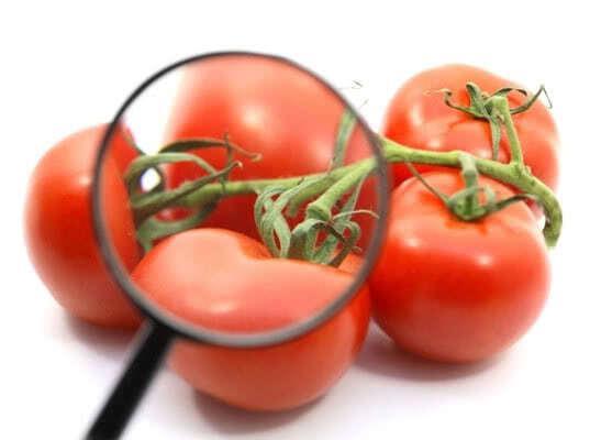 Армянские томаты с молью и огурцы с трипсом возвращены экспортерам